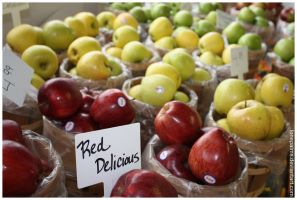 Apples at Casola Farms by lonepalms