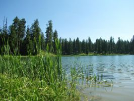 forest marsh view 4 by brandrificus-stock