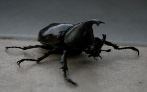 Henshin: Stag Beetle by Foodtrip