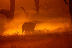 My Africa 57 by catman-suha