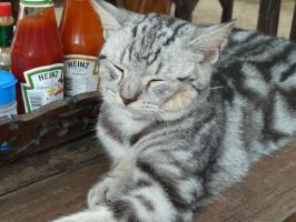 Krabi Trip pic 4 kitty again... by pammy01251