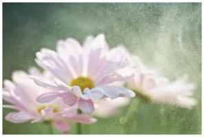 Flowers  Mist by Jack-Nobre