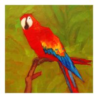 Scarlet Macaw by Duffzilla