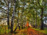 Birches by IvanAndreevich