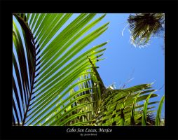 Cabo - Palm by xproVoke