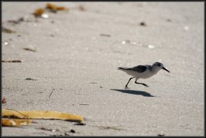 Beach with Running Bird 1 by Macomona