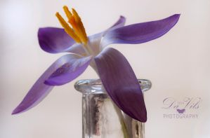 Melody of Purple Light by Davils-Photography
