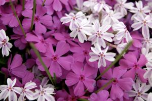 Tiny Cluster by WoodenOx