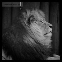 A Caged King 01 by tmfNeurodancer