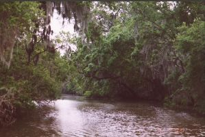 louisiana bayou by CharlotteVale