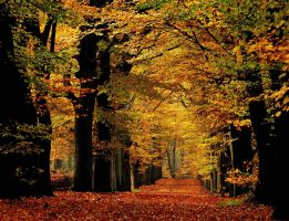 Autumnal splendour by jchanders