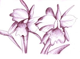 pencilled flowers by blastedgoose