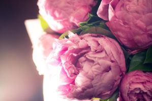 Peonies 2 by Morkissa
