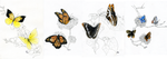 Butterfly Illustrations by dragon-shark