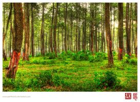 Green Forest by perfectSky