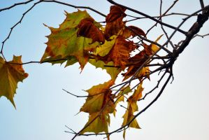Rusted Leaves by adamforce