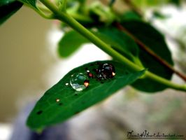 .WaterDrops. by yamixhikari
