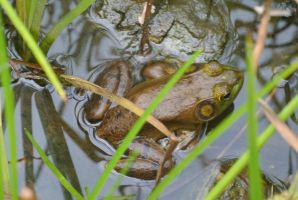 Frog In the Murk by Miss-Tbones