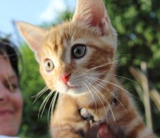 Neighbour's Kitten by Phy6