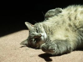 fat lazy cat by Irie-Stock