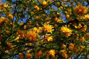 Little sunshines by MDelicata