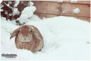 Snow Bunny by Clerdy