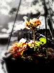 A single flower by LBBPhotography