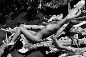 driftwood cradle monochrome by andre-j
