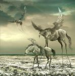 WILD HORSES 4 by aspius
