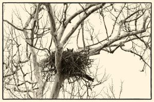 Once Upon a Tree There Was an Owl by clippercarrillo
