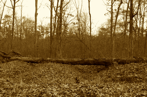 Trenches of Time Sepia by SergeantKilrain
