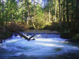 Whatcom Falls by cjosborn