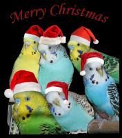 Merry Birdy Christmas by Lunchi