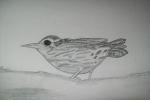 Black and White Warbler by FurnaceFairy