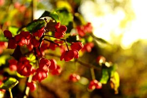 Spindle tree by Optionator
