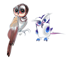 Owls by carottomachine