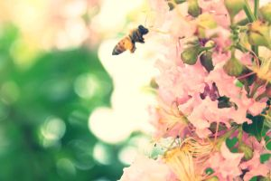 Busy Bee by Identifyed-Khaos