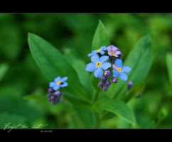 Forget me not. by oro-elui