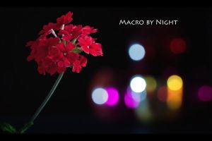 Macro by night - D101 by neoflo