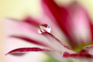 DROPLET VI by Itswen