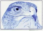 Ballpoint goshawk (only BIC blue ) by Angeliqueperrin