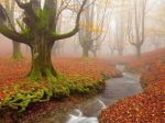Autumn in early morning by BelovedImmortal