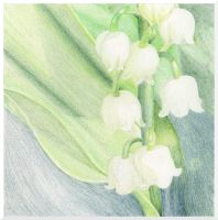 Lily of The Valley by nataliebeth