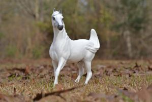 The White Stallion by BamaBelle2012