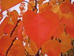 October's heart by VasiDgallery