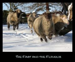 The fast and the furious by Rollwurst