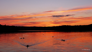 Sunset colors with ducks by Mogrianne