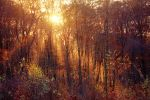 Autumn Rays by ElyneNoir