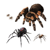How to draw spiders - movement and species by LadyAway
