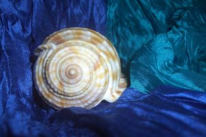 Seashell in the blue by ainoani